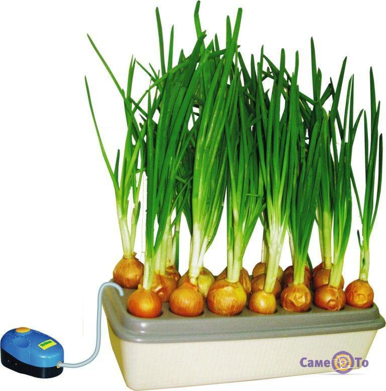 Проращиватель лука Луковое счастье - гидропонная установка