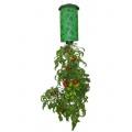 Вирощування помідорів вдома - Upside Down Tomato Planter
