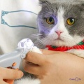 Ножиці для стрижки кігтів у котів і собак Pet comfy