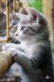 """Настінний інфрачервоний обігрівач-картина Тріо """"Кошенята"""""""
